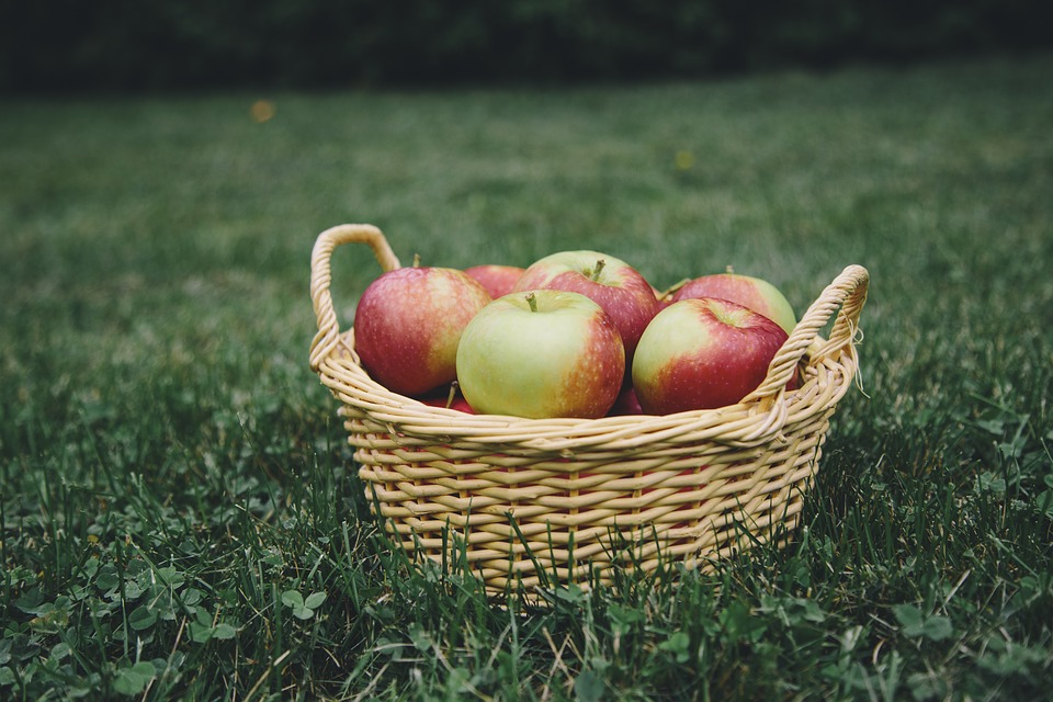 A basket of apples sitting in the grass