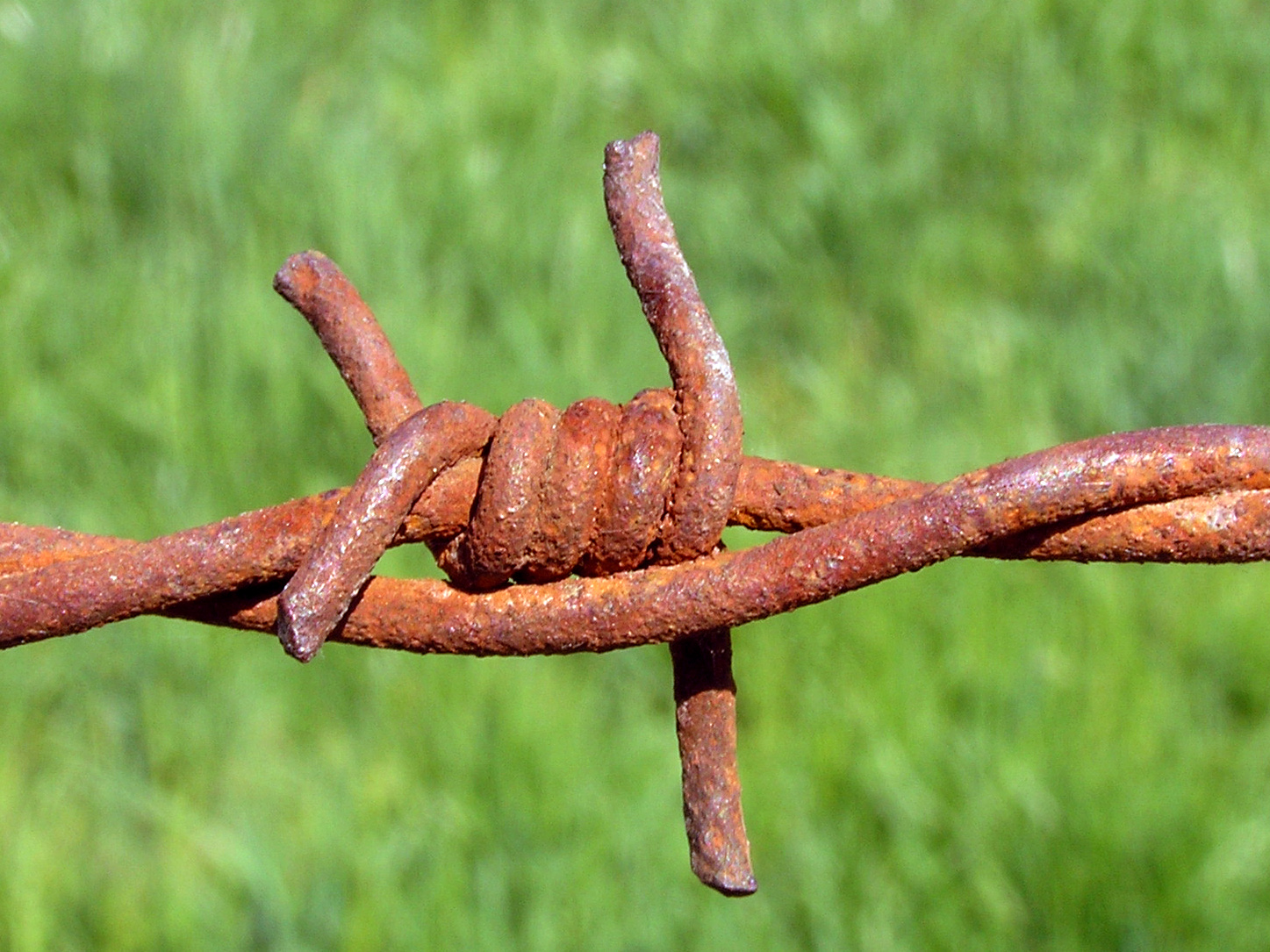 Figure 17.1-2. Rusted Barbed Wire