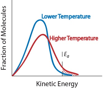 Figure 17.1-4. Effect of temperature on the kinetic energy distribution of molecules in a sample.