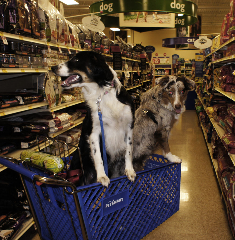 Two dogs riding in a shopping cart inside of a Pet smart store.