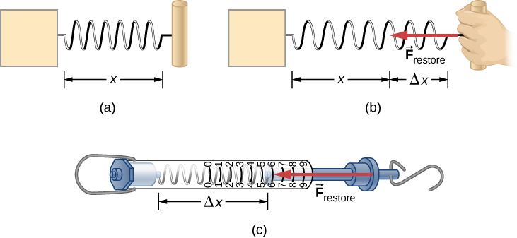 Figure a shows an undisturbed string of length x. Figure b shows the spring stretched by a distance delta x and a force F restore acting in the opposite direction. Figure c shows a spring scale. A hook attached to a spring is pulled in one direction. There are markings on the scale to show how much the spring has been stretched.