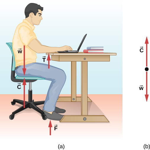 Figure a shows a person sitting on a chair with his forearms resting on a table. Force C in the upward direction and W in the downward direction, both having equal magnitude, act along the line of his torso. Force T is in the upward direction near the person's forearms. Force F is in the upward direction near the person's feet. Figure b shows the free body-diagram of C and W.