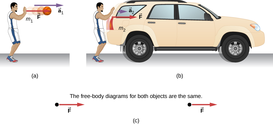 Figure a shows a person exerting force F on a basketball with mass m1. The ball is shown to move to the rigth with an acceleration a1. Figure b shows the person exerting the same amount of force, F on an SUV with mass m2. The acceleration is a2, which is much smaller than a1. Figure c shows the free body diagrams of both systems shown in figure a and figure b. Both show the force F having the same magnitude and direction. The label reads: the free-body diagrams of both objects are the same.