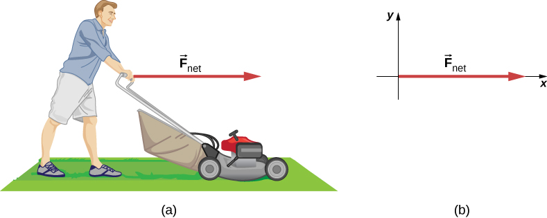 Figure a shows a person using a lawn mower on a lawn. Force F net points right, from the person's hands. Figure b shows the force F net along the positive x axis.
