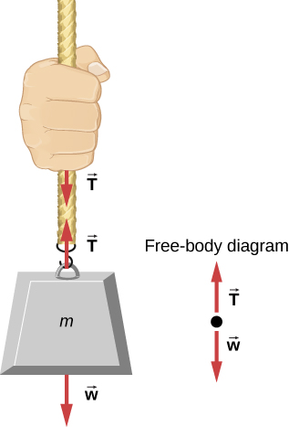 Figure shows mass m hanging from a rope. Two arrows of equal length, both labeled T are shown along the rope, one pointing up and the other pointing down. An arrow labeled w points down. A free body diagram shows T pointing up and w pointing down.