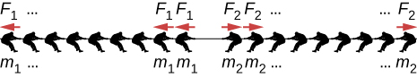 Figure shows two teams of nine members each pulling on a rope form either side. Each member of the team on the left has mass m1 and applies force F1. Each member of the team on the right has mass m2 and applies force F2.