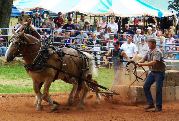 A photograph of horses pulling a loaded cart at a fair.