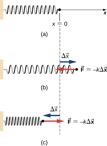 A horizontal spring whose left end is attached to a wall is shown in three different states. In all the diagrams, the displacement x is measured as the displacement to the right of the right end of the spring from its equilibrium location. In figure a, the spring is relaxed and the right end is at x = 0. In figure b, the spring is stretched. The right end of the spring is a vector delta x to the right of x = 0 and feels a leftward force F equals minus k times the vector delta x. In figure c, the spring is compressed. The right end of the spring is a vector delta x to the left of x = 0 and feels a rightward force F equals minus k times the vector delta x.