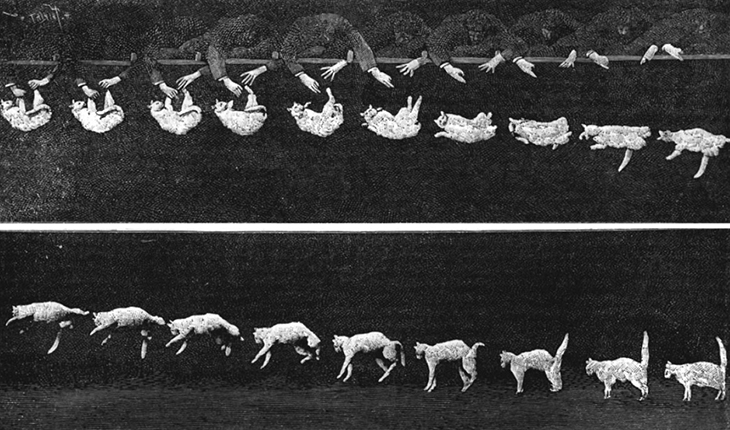 A multiple exposure photograph of a cat falling. In the first image, the cat is held by its feet, upside down. It is released from this position and falls, but rotates as it turns so that in the last few images, it is right side up.