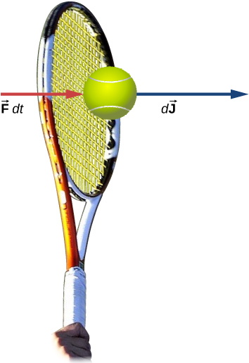 A drawing of a tennis racket hitting a tennis ball. Two arrows pointing to the right are drawn near the ball. One is labeled vector F d t and th other is labeled d J vector.
