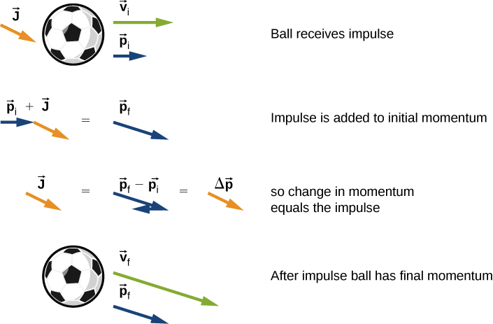 "A ball and three vector arrows are shown. The arrows are: v sub i to the right, p sub i to the right and J pointing down and to the right. This figure is labeled ""Ball receives impulse."" The next figure shows the p i vector to the right and the J vector, down and to the right with its tail aligned with the tip of the p i vector. This is labeled p sub i plus J and is equal to the p sub f vector. This figure is labeled impulse is added to initial momentum. The next figure shows the J vector equals the p f vector with a vector that is the opposite of p sub i placed with its tail at the p sub f tip. The p vectors are labeled p sub f minus p sub i. This is equal to a vector identical to the J vector but labeled delta p. This figure is labeled ""so change in momentum equals the impulse. The last figure shows the ball and two arrows: the p sub f vector and another vector in the same direction and labeled v sub f. This figure is labeled ""after impulse ball has final momentum."""