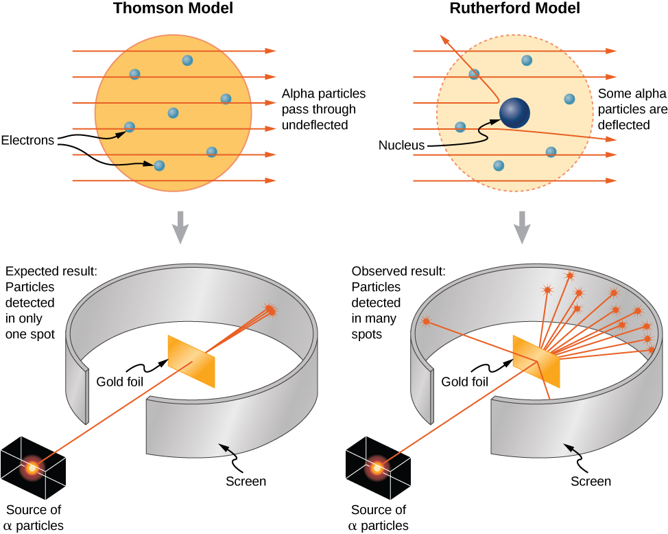 Illustrations of the Thomson and Rutherford models of the atom and the associated experiments. The Thomson model has electrons, illustrated as small solid balls distributed throughout a large, uniform sphere. Alpha particles pass through undeflected. Several trajectories of alpha particles, incident from the left and travelling horizontally to the right are shown as straight, parallel lines that pass through the atom unchanged. The experiment consists of a collimated source of alpha particles. The beam of particles passes through a gap in a screen that surrounds a gold foil target. The beam passes through the target, spreading a little, but hitting the screen in a small spot on the far side of the screen. The expected result is particles detected in only one spot. The Rutherford model has electrons, illustrated as small solid balls distributed throughout the atom, but the nucleus is a small sphere in the center. Several trajectories of alpha particles, incident from the left and travelling horizontally to the right are shown as straight, parallel lines as they enter the atom. Some pass through unchanged, one is bent slightly away from its original direction, and is bent back at an angle large than 90 degrees. The experiment consists of a collimated source of alpha particles. The beam of particles passes through a gap in a screen that surrounds a gold foil target. The beam passes through the target, most of it passing through but spreading significantly and hitting the screen on the far side over an extended region, and a few of the particles hitting the screen on the same side of foil as the source. The expected result is particles detected in many spots.