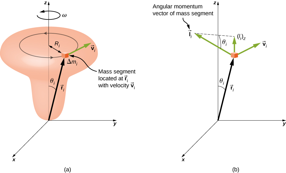 Figure a shows a door-knob shaped object and an x y z coordinate system. The object is arranged vertically and centered on the z axis, with the wide knob at the top. The object is rotating about the z axis, counterclockwise as viewed from above, with angular velocity omega. A small part of the object is highlighted. This mass segment, labeled Delta m sub i, is located at vector r sub i, moves with velocity vector v sub i, and traces a counterclockwise circle of radius R sub i. The vector r sub i extends from the origin to the mass segment and makes an angle of theta sub i with the z axis. The vector v sub i is tangent to the circle traced by the mass segment. Figure b shows the x y coordinate system and the mass segment. Vectors r sub i and v sub i are shown again, as is the angle theta sub i between the vector r sub i and the z axis. The angular momentum vector of the mass segment, vector l sub i, is also shown. The vector l sub i is perpendicular to both r and v, as given by the right hand rule, and has a z component upward, shown on the diagram and labeled l sub i z. The remaining side of the right triangle whose hypotenuse is l sub i and vertical side is l sub i z is shown as a dashed line. The angle adjacent to this side, and opposite the vertical side l sub i z, is theta sub i.