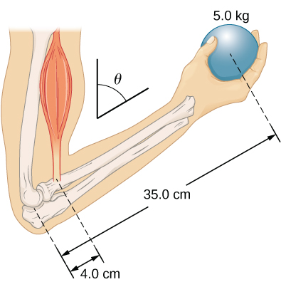 Figure is a schematic drawing of a forearm rotated around the elbow. A 5 kilogram ball is held in the palm. The distance between the elbow and the ball is 35 centimeters. The distance between the elbow and the biceps muscle, which causes a torque around the elbow, is 4 centimeters. Forearm forms a theta angle with the upper arm.