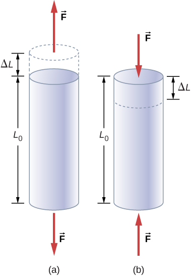Figure A is a schematic drawing of a cylinder with a length L0 that is under the tensile strain. Two forces at the different sides of cylinder increase its length by Delta L. Figure B is a schematic drawing of a cylinder with a length L0 that is under the compressive strain. Two forces at the different sides of cylinder reduce its length by Delta L.