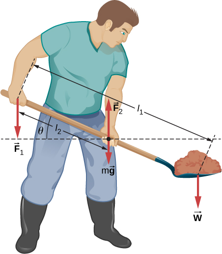 Figure shows a gardener lifting a shovel full of ground with both hands. Force F1 is applied to the back hand. Force F2 is applied to front hand. Force w is applied to the front of shovel with ground. Distance between the back hand and front of shovel is l1. Distance between the back and front hands is l2. Angle between the shovel and line parallel to the ground is theta.