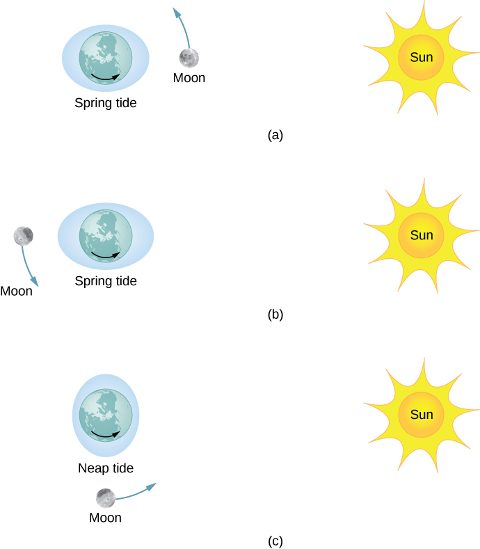 Figure a shows the earth centered within a horizontal shaded ellipse labeled spring tide. The sun is positioned to the right of the earth and the moon is in line, in between the earth and sun, and orbits counterclockwise. Figure b shows the earth centered within a horizontal shaded ellipse labeled spring tide. The sun is positioned to the right of the earth and the moon is in line with the earth and sun but to the left of the earth, and orbits counterclockwise. Figure c shows the earth centered within a vertical shaded ellipse labeled neap tide. The sun is positioned to the right of the earth and the moon is below the earth, and orbits counterclockwise. The ellipse in part c has a noticeably smaller vertical major axis than the horizontal major axes of the ellipses in parts a and b.