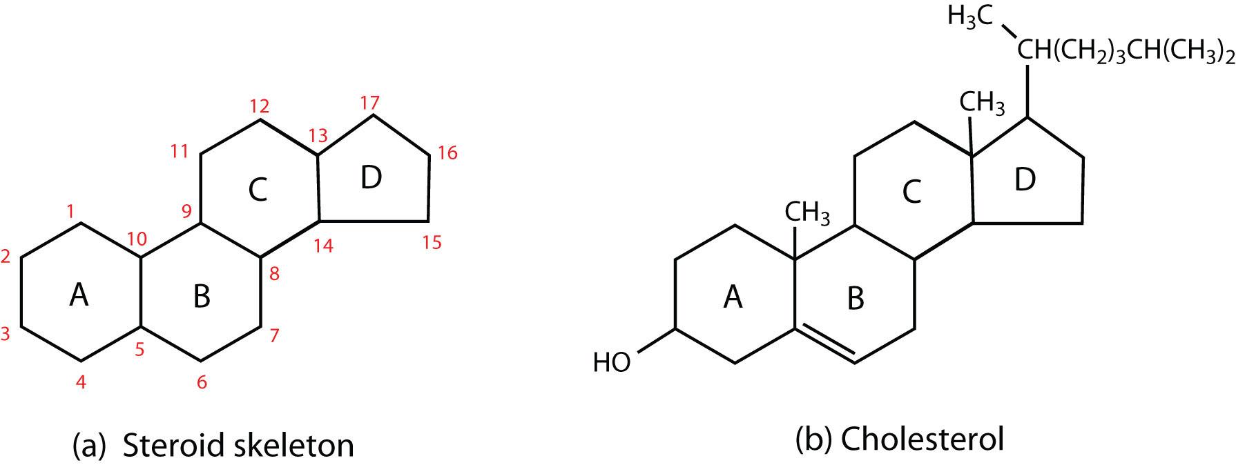 Steroid organic chemistry sylvania golden dragon silver
