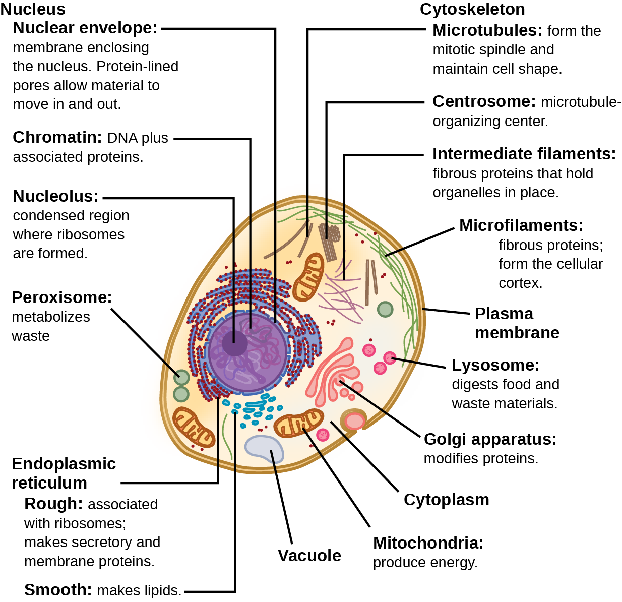 Diagram Eukaryotic Cell