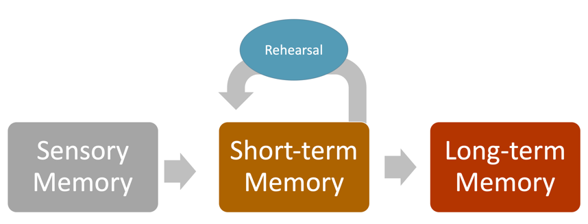 Depiction of Information Processing. From left to right: Sensory Memory, Short-term Memory (Rehearsal), and Long-term Memory