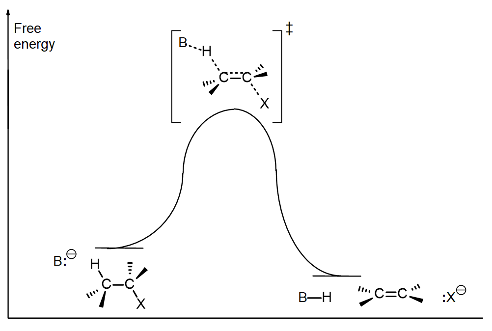 Free energy diagram for an E2 rxn, showing a rise to form the transition state then a fall to the products