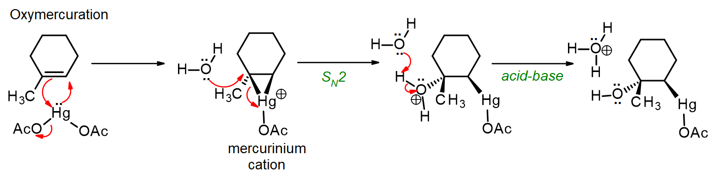 Mercury(II) acetate adds to 1-methylcyclohexene to form a mercurinium cation, which is opened by water and then forms an organomercury compound