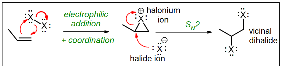 X2 adds to propene, initially forming a halonium ion, which is attacked by X- to produce a dihalide
