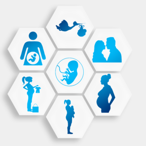 Graphic of stages of pregnancy from conception to birth