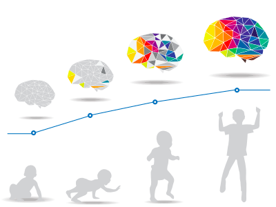 An illustration of a baby developing to a teenager alongside brains developing in mass and connections.