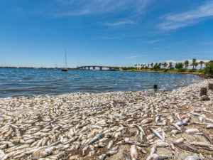 Photo of dead fish covering the sandy shore of a beach.