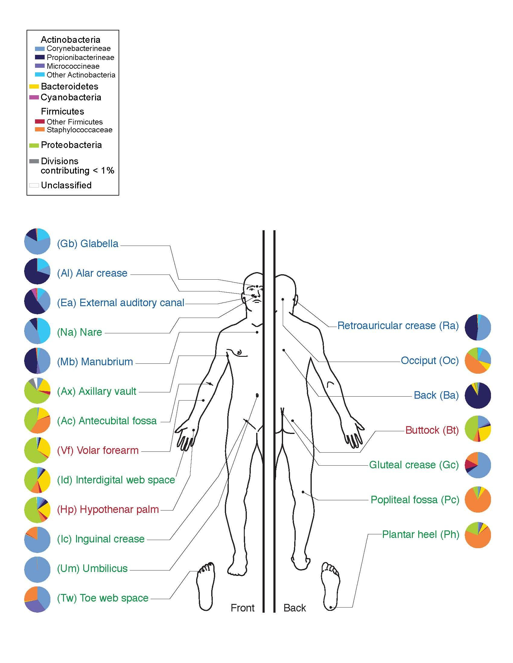The Human Skin Microbiome Project