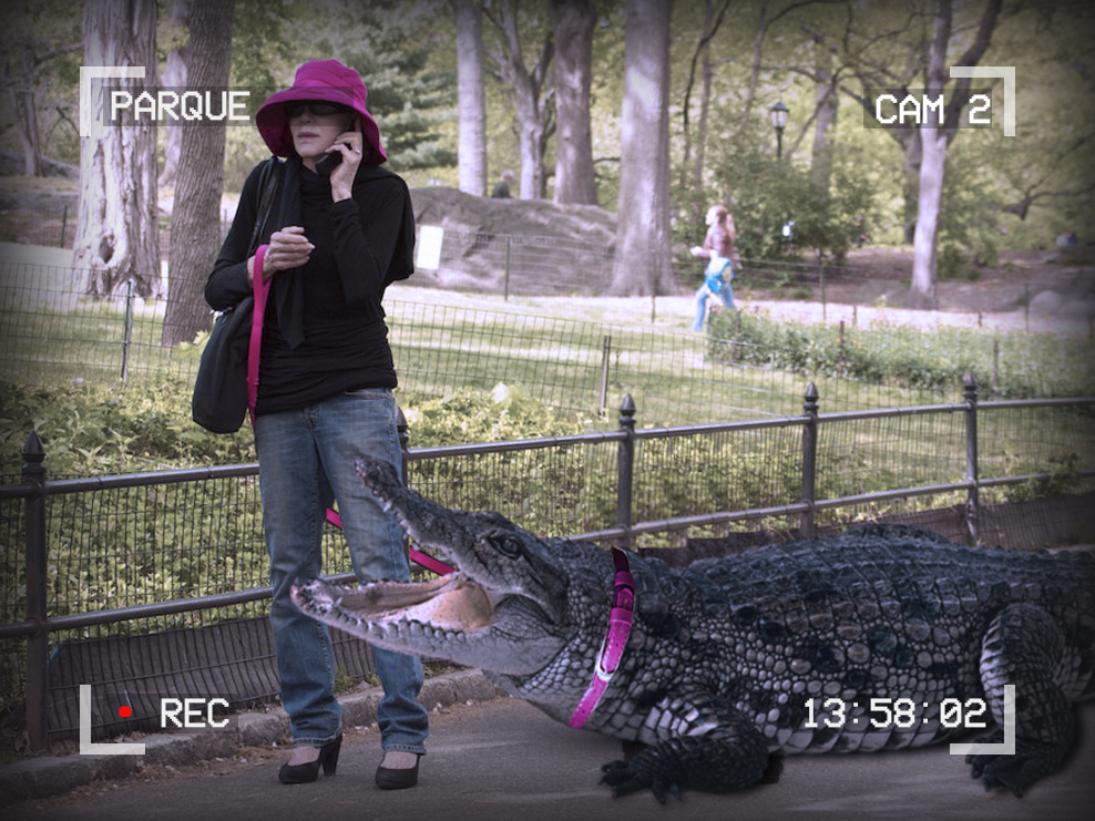 Photo of a woman talking on a cellphone and holding a leash. There is a large alligator on the leash. The text around the outside of the image reads: Parque, Cam 2, 13:58:02, recording