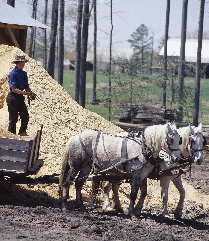 Amish parents are allowed to homeschool their children without harassment from local school authorities as a result of the decision in Wisconsin v. Yoder (1972). (Credit: Carol M. Highsmith, Photographer, between 1980—2006; at https:www.loc.gov/item/2011630183)