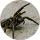 Round image (like an email avatar) of a spider