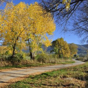 Photo of a country road in autumn. The sky is clear and the leaves on the trees are yellow.