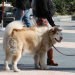 Photo of a large dog