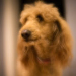 Photo of a dog looking handsome in soft focus