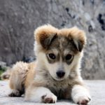 Photo of a young puppy