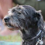 Photo of an elderly dog