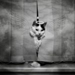 a cat behind curtains with painted wings and a halo