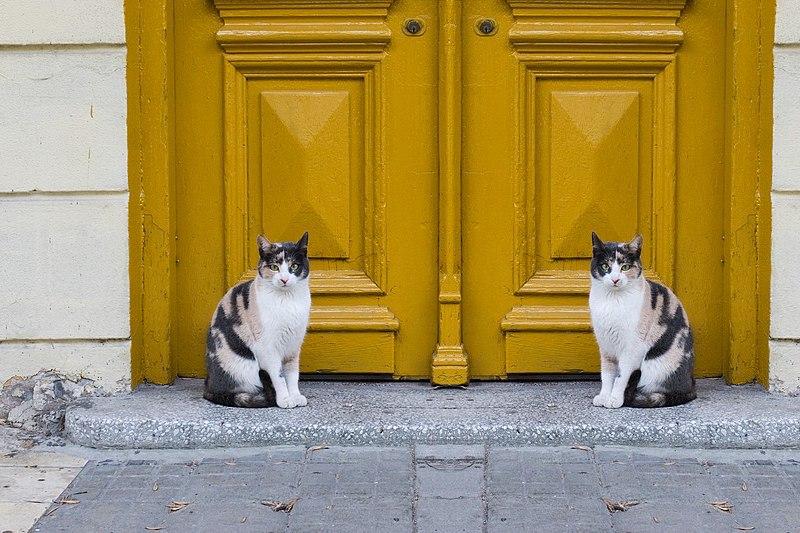 cats near an entrance