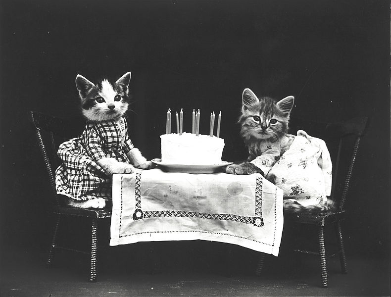 Kittens wearing dresses