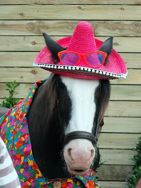 A horse wearing a hat, a shirt, and glasses.
