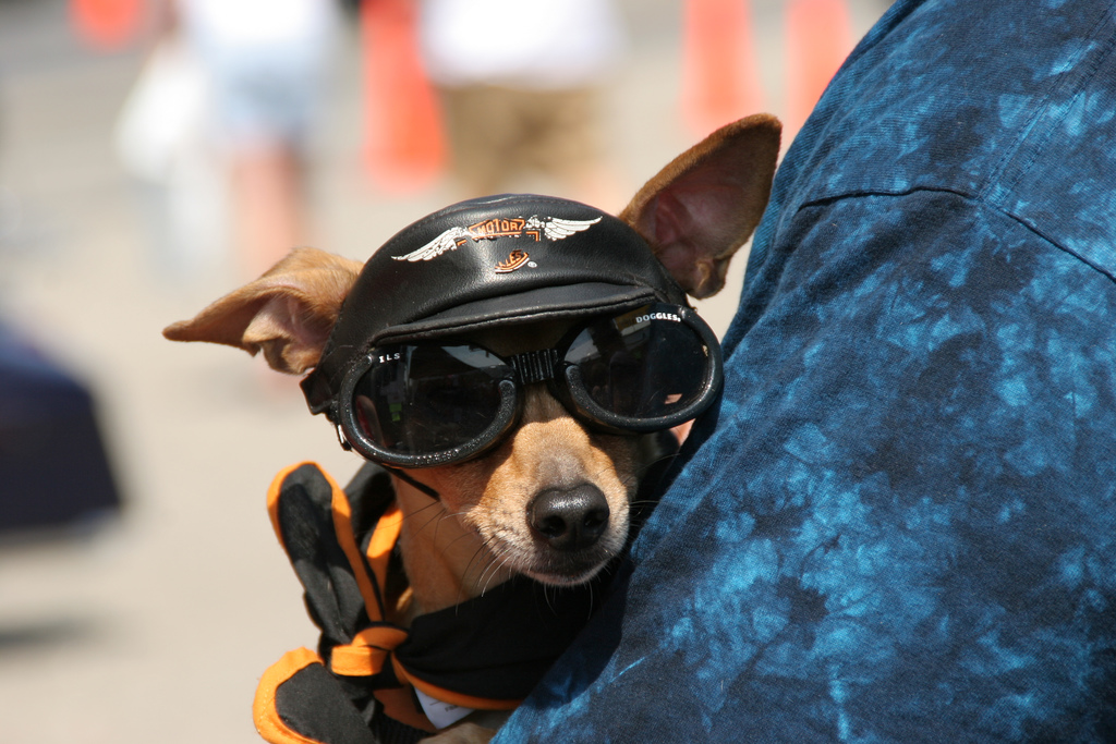 Dog wearing a cap, glasses, and a scarf.