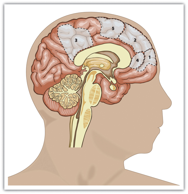 Areas of the brain the process information about the self
