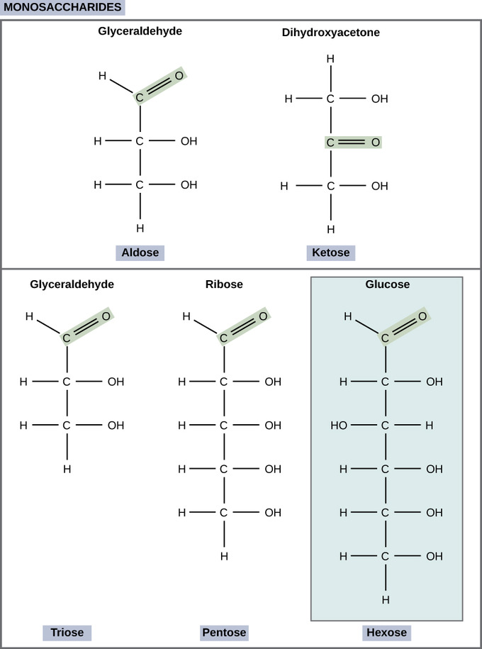 Carbohydrate Molecules Introduction To Chemistry