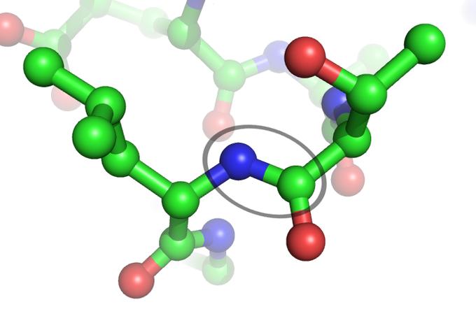 peptide-bond.png (680×462)