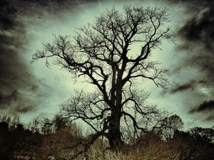 Spooky gnarled tree backlit with moonlight