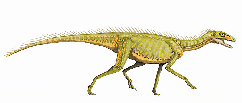 A dinosaur that likely walked on all fours. It had narrow legs and a long tail.