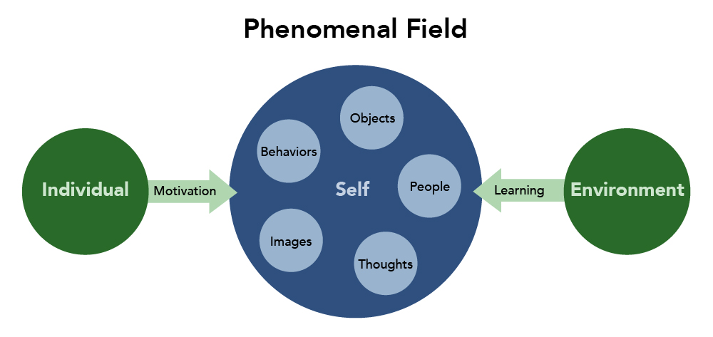 The Phenomenal Field. The self is at the center of the phenomenal field with the following items surrounding the self: objects, people, thoughts, images and behaviors. Individual and Environment are on the outside of the phenomenal field. The influence from an individual is motivation and the influence from the environment is learning.